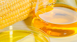 Refining of Vegetable Oils for Biofuels - TR